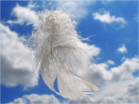 Перья – духовные послания